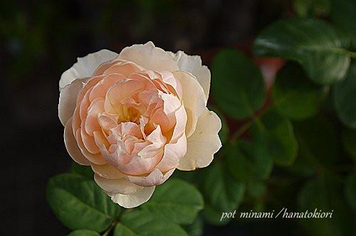 Anburizi_2012_0918_062339p1140299