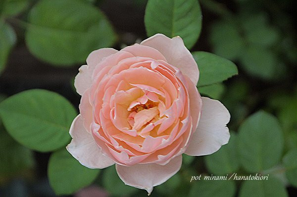 Torawarasu_2012_0919_063518p1140305