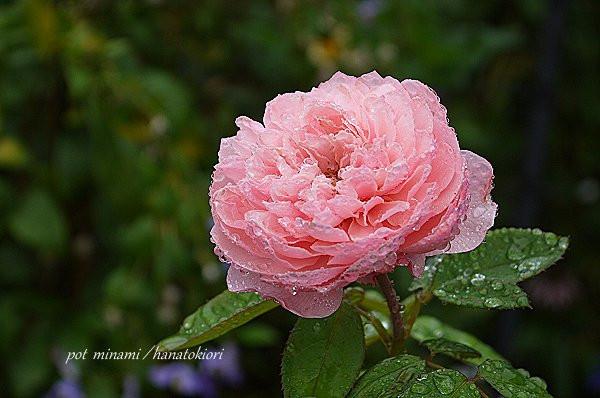 Arunweek_2012_0930_094634p1140508