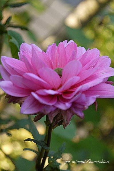 Pink_2012_1022_065528p1140943